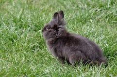 Gullig kanin Fotografering för Bildbyråer