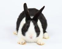 Gullig kanin arkivfoto
