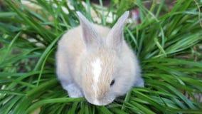Gullig kanin stock video