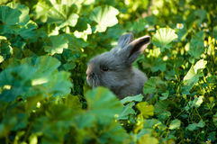 gullig kanin Royaltyfria Foton