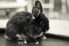 gullig kanin Arkivbilder