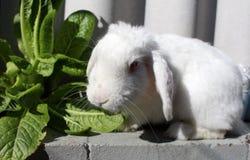 Gullig kanin i trädgård royaltyfri foto