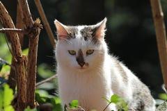 Gullig katt-/ögonkontakt Royaltyfria Foton
