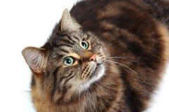 gullig katt 2 Arkivfoto