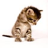 gullig katt Arkivfoto