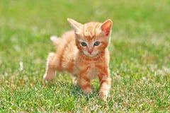 gullig katt Royaltyfria Bilder
