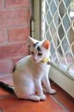 Gullig katt Royaltyfria Foton
