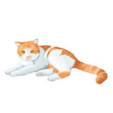 gullig katt Arkivfoton