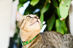 gullig katt Royaltyfri Bild