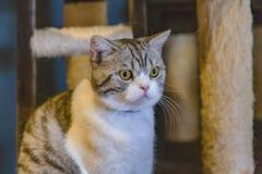gullig katt Royaltyfri Foto