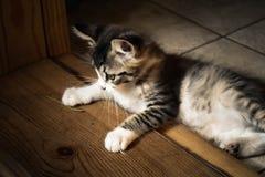 gullig katt Royaltyfri Fotografi