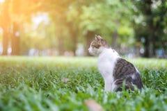 gullig katt arkivbild