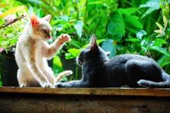 Gullig katt för pott som två tillsammans spelar Arkivbilder