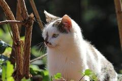 Gullig katt/halv profil Royaltyfria Foton