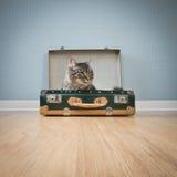 Gullig katt i en tappningresväska Arkivbilder