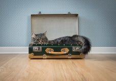 Gullig katt i en tappningresväska Royaltyfri Foto