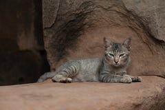 Gullig katt i en tempel Royaltyfri Foto