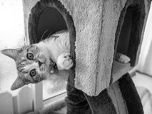 Gullig katt i svartvit stil Arkivfoton