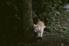 gullig katt little Fotografering för Bildbyråer