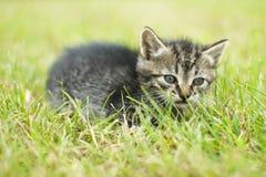 gullig katt little Arkivbild