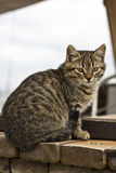 gullig katt little Arkivfoto