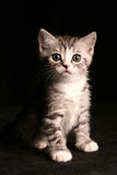 gullig katt little Royaltyfria Foton