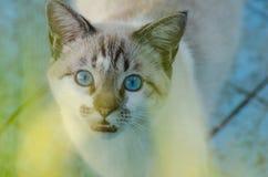 Gullig katt med blåa ögon som spelar inom en tom pöl Royaltyfri Bild