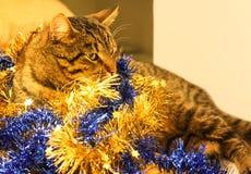 Gullig katt med den dekorativa struntsaken Arkivfoton