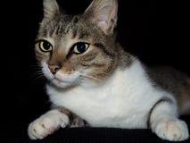 Gullig katt med mycket stora ögon Royaltyfri Bild