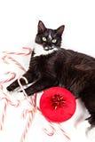 Gullig katt och julgåva Arkivbilder