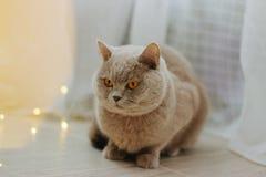 Gullig katt och suddiga julljus arkivbilder