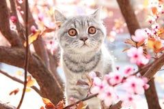 Gullig katt på att blomstra trädet arkivbilder