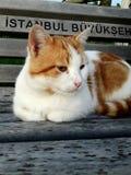 Gullig katt på bänk Arkivfoton