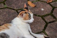 Gullig katt på gångbanan royaltyfria bilder