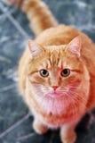 Gullig katt på golvet Royaltyfri Bild