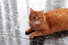 Gullig katt på golvet Royaltyfri Fotografi