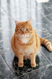Gullig katt på golvet Arkivbilder