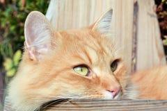 Gullig katt på trädgården Arkivfoton