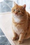Gullig katt på golvet Arkivbild