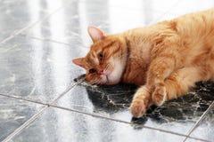 Gullig katt på golvet Royaltyfria Bilder