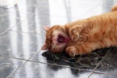 Gullig katt på golvet Fotografering för Bildbyråer