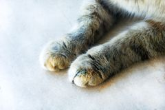 Gullig katt` s tafsar på en trävit halva-strimmig katt katt royaltyfri fotografi