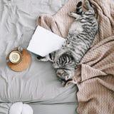 Gullig katt som hemma sover Bok och kopp av citronte med den hem- dekoren i sängsäng Skandinavisk stil, hygge, hemtrevligt begrep royaltyfri fotografi
