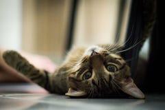 Gullig katt som läggas ner nolla-golv royaltyfri fotografi