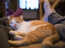 Gullig katt som ligger mellan mannen och kvinnaben arkivfoto