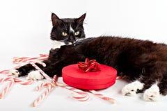Gullig katt som ligger nära den dekorativa gåvan Royaltyfria Bilder