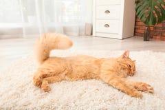 Gullig katt som ligger på filten royaltyfri fotografi