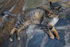 Gullig katt som ligger på stengolv Arkivbild