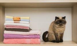 Gullig katt som placerar nära högen av handdukar Arkivfoton