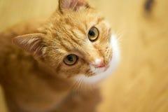 Gullig katt som ser in i kameran royaltyfri fotografi